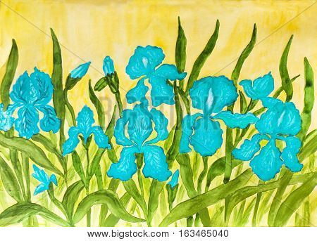 Hand painted picture watercolours flower bed with many blue irises on yellow background.