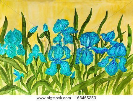 Hand painted picture watercolours flower bed with many blue irises on yellow background. Size of original 42 x 30 sm.