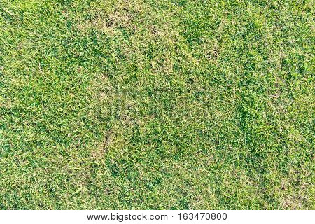 Aerial view of green lawn - background texture