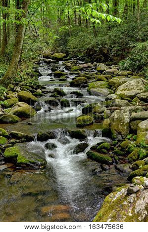 Mossy Forest Creek with natural water poring over rocks
