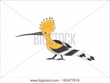 Hoopoe isolated on white background. Exotic bird. Vector illustration