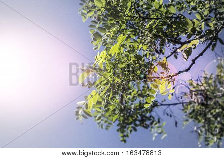 Leaves backgrund: yellow leaves of maple in the strong sun on the sky background