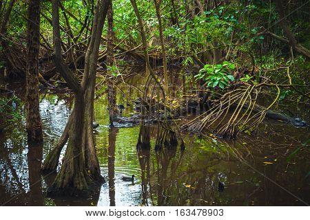 Wild Tropical Rainforest Landscape