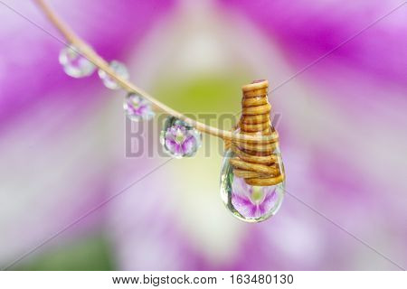 Purple color of orchid is refracted in drops of water