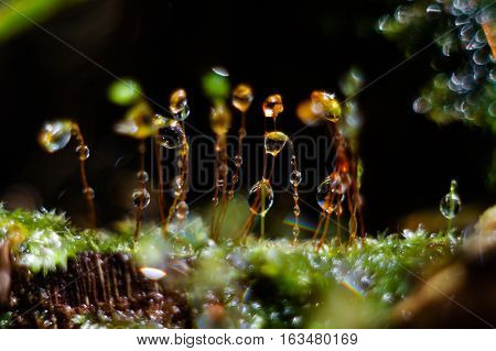 Drops of water on moss with dark background