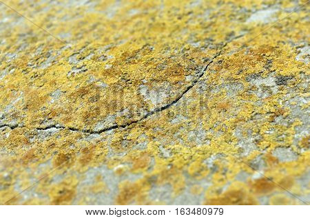 Cracked wall with lichens: background for web usage