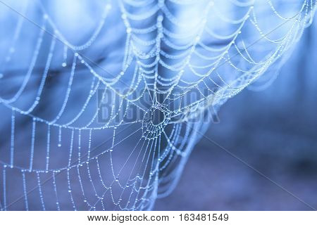 Spiders web with water droplets on a blue background