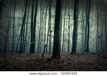 Green mysterious forest in the fog. Dark woods