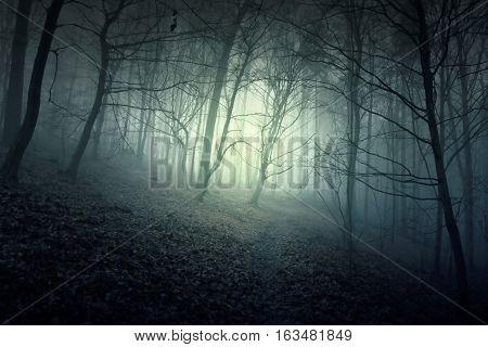 Nightmare horror forest with blue light. Dark woods