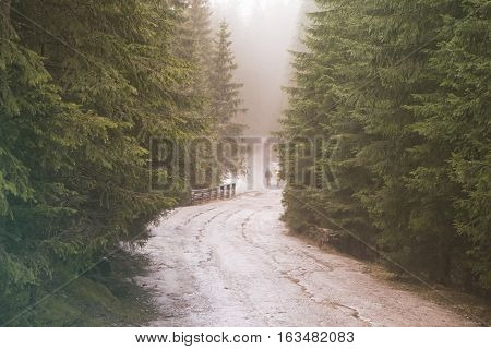 Dirt road through the coniferous forest. The wanderers on the road. Hipster colors