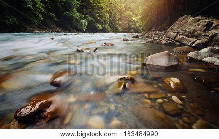 Forest River Flow