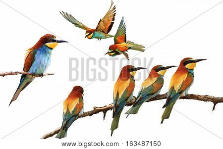 set of colored birds in different poses isolated on white, birds of paradise, bee-eaters, iridescent colors