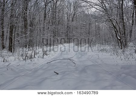 Forest road through the winter woods. Everything is covered with a thick layer of snow