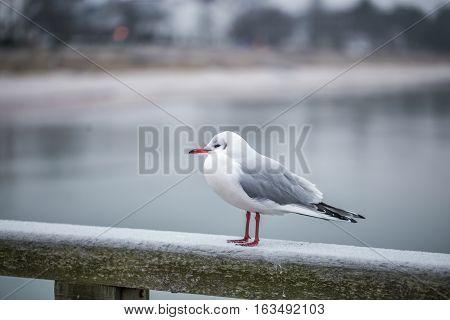 Seagull On Promenade