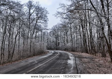 The road through the winter woods. All lightly snowing. Left turn