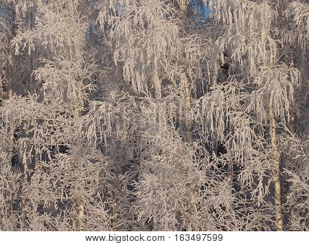 Fantastic patterns on trees were created by the nature from snow