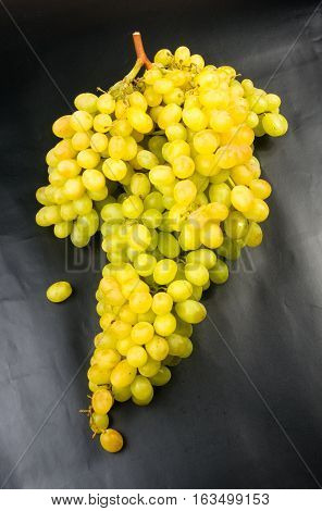 Large grapes cluster amber color on black background