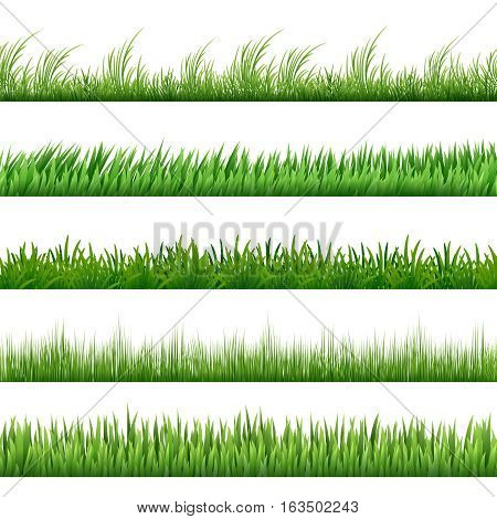 Green grass pattern set. Macro green grass borders isolated on white background. Freshness floral herbal border. Vector illustration
