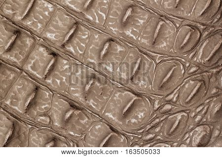 Texture of genuine leather close-up, embossed under the skin a an olive color reptile, background