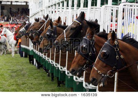 Horserace Start Gate