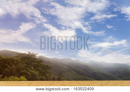 Hill top with wide puffy cloud blue sky and mountain grass field and tree nature background