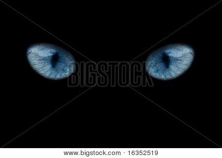 wild blue eyes isolated on black