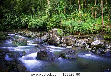River side forest with rocky background. Clear water