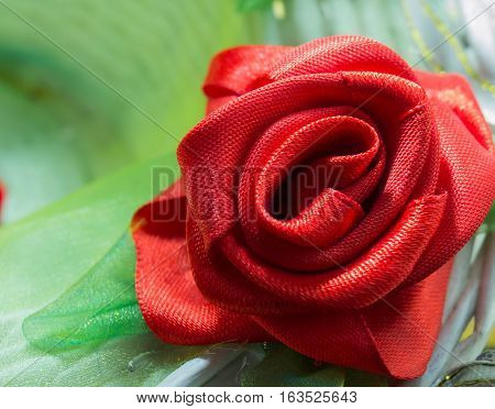 objects, roses, isolated, red, flower, head, nature, single