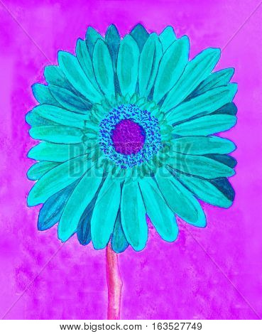 Blue gerbera flower on pink background watercolor painting.