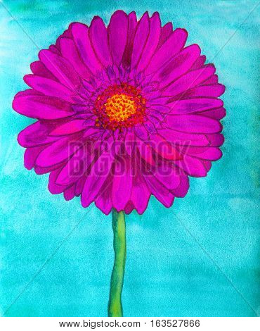 Pink gerbera flower on blue background watercolor painting.