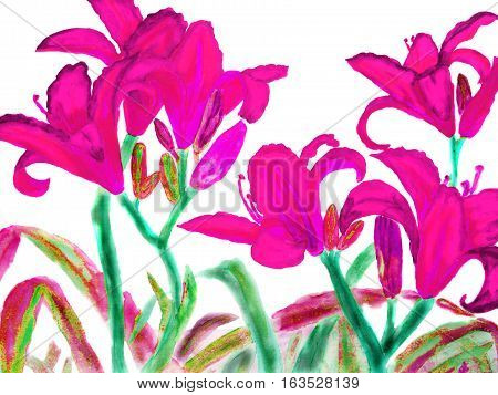Hand drawn picture watercolour - few red lilies.
