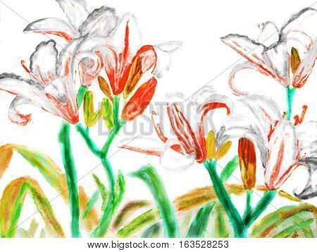 Hand drawn picture watercolour - white-red lilies on white background.