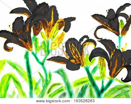 Hand drawn picture watercolour - black lilies on white background.