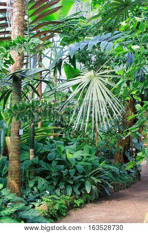 HEIDELBERG, GERMANY - MAR 30, 2014: Trees inside botanical garden. Botanischer Garten Heidelberg.