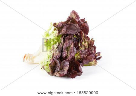 Leaf salad isolated on white background. Food ingredients