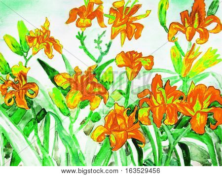 Orange daily lilies hand drawn painting water colours.