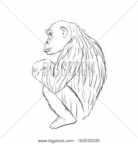 Gorilla sketch. Monkey sits and thinks. Line style