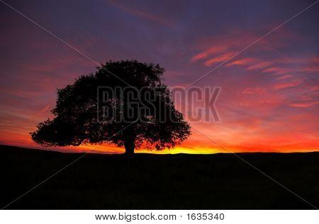 Rockfield Farm Sunset