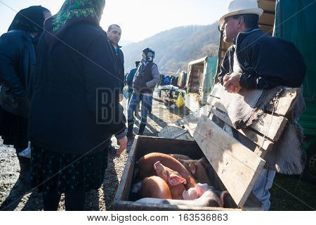 Breb Romania - November 18 2016: A man sells baby pigs in a market in Breb Maramures Romania.
