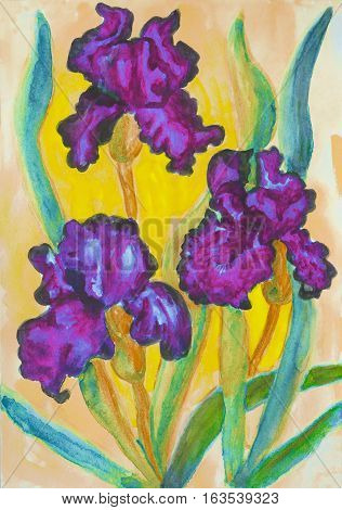 Watercolor painting three purple irises on yellow background.