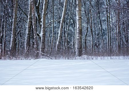 Wisconsin forest covered in snow from a December storm.