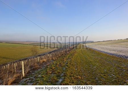 Frosty Landscape With Saplings