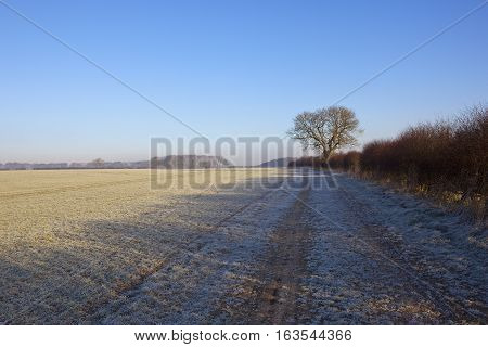 Frosty Bridleway In Winter