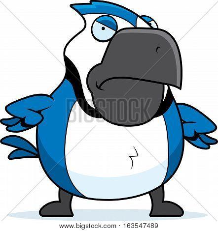 Cartoon Blue Jay Angry