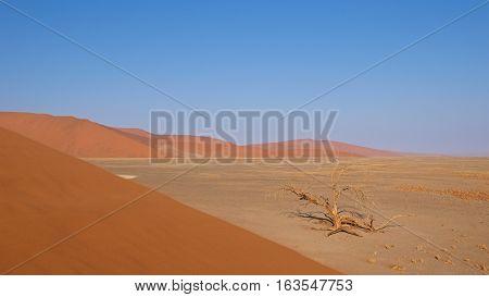 Sand dunes in Namib-Naukluft National Park, Namibia