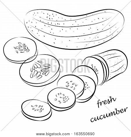 hand drawn fresh cucumber, chopped cucumber foodie icon set in black outline isolated on white background with black outline. vector illustration.