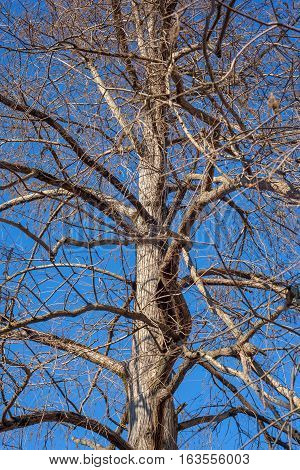 swamp cypress branches on blue sky. nature