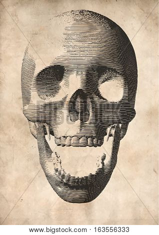 Engraving vector skull illustration in front view on old paper background