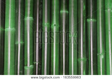 Close Up of Rows of Bamboo Canes