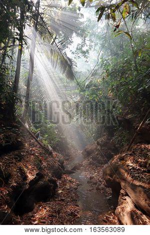 sunbeams shining through misty rainforest, Myanmar, Asia
